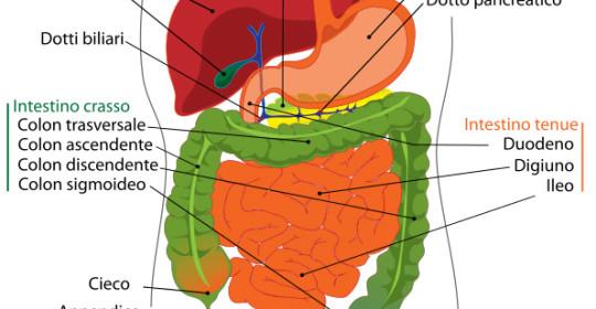 La dieta a basso contenuto di FODMAP per il trattamento della sindrome dell'intestino irritabile
