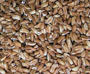 Un cereale al giorno…Il Farro